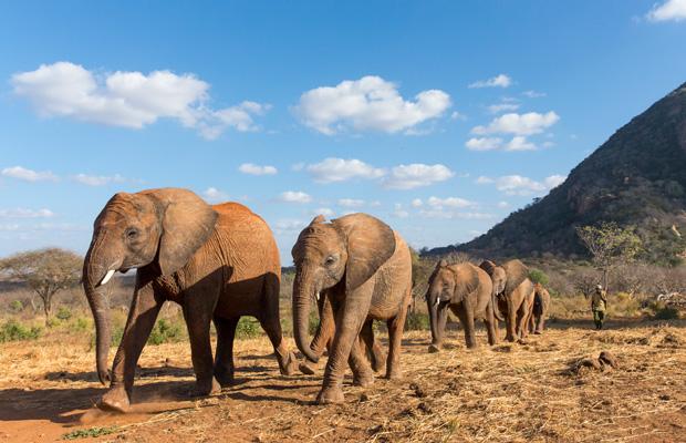 Elefantes en Kenya